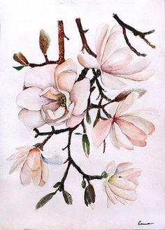 Magnolia by Emmatyan on DeviantArt