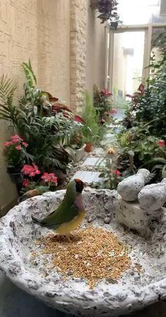 Beautiful Nature Pictures, Beautiful Gif, Beautiful Birds, Animals Beautiful, Beautiful Morning Messages, Love Heart Gif, Rain Wallpapers, Ganesh Images, Good Night Gif