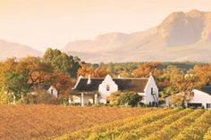 "Wine lands Cape Town – the heaven of wines. In the series of attractions and places in Cape Town that are so very ""not-to-miss"" on your trip to South Africa, Cape Wine lands are a heaven for wine tasting. Tourism Day, Wine Tourism, Wellington South Africa, Farmhouse Paintings, Audley Travel, Wine Safari, Place Names, Cape Town, Wines"
