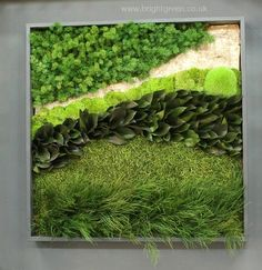 Custom Designed Moss Wall Art using Preserved Bun Moss, Ming Fern, Salal Leaves, Turf and Tiki Ferns which were combined with artificial silver birch bark