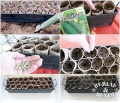 Recycle and Reuse Toilet Paper Rolls to Plant Seeds