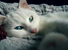 So beautifull eye :my cat