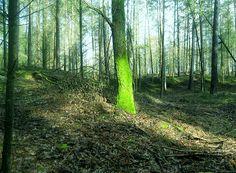 Lichttherapie selbst gemacht - Herbstblues und Winterdepression | manipura.de/blog