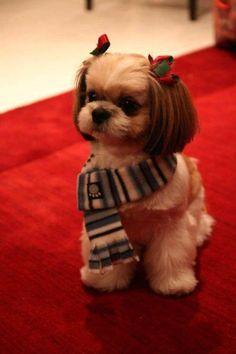 Awww so cute:
