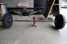 17 reipasta ja itsenäistä koiraa touhuaa omia juttujaan | Vivas