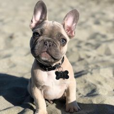 Bébé Garçon Fille Mon Meilleur Ami Is My French Bulldog Animal de Compagnie,