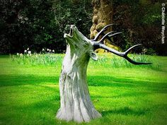 I was doing yard work and I was trying to think of some ways to avoid getting rid of a certain tree stump in our front yard. Tree stumps are. Wood Sculpture, Garden Sculpture, Sculptures, Sculpture Ideas, Baumgarten, Tree Carving, Old Trees, Tree Trunks, Garden Trees