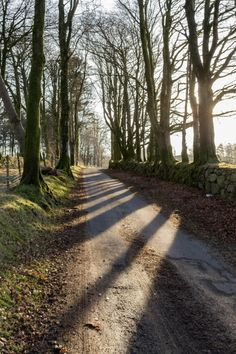 Cator with long shadows Cool Pictures, Cool Photos, Amazing Photos, Places Around The World, Around The Worlds, Country Life, Country Roads, Forest Path, Long Shadow