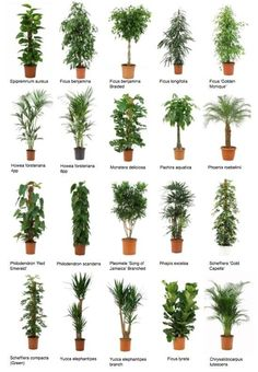 Indoor Plant Hire Wagga Wagga - Wagga Indoor Plant Hire