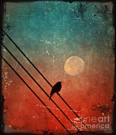 Moon Talk Photograph by Tara Turner - Moon Talk Fine Art Prints and Posters for Sale