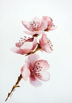 How to paint Cherry Blossom in Watercolor: step by step guide to aquarelle FLOWE. - How to paint Cherry Blossom in Watercolor: step by step guide to aquarelle FLOWERS - Cherry Blossom Watercolor, Cherry Blossom Art, Tattoo Cherry Blossoms, Watercolor Flower Painting, Simple Watercolor Flowers, Watercolor Cake, Apple Blossoms, Pink Painting, Cherry Blossom Flowers