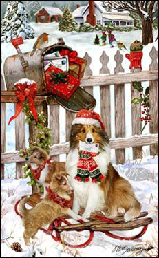 Aww looks just like my childhood dog Snickers! Shetland Sheepdog - Christmas Delivery