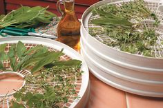 Preserving Herbs--Dehydrators provide a quick and easy way to dry your favorite herbs.