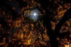 Fall Night Sky