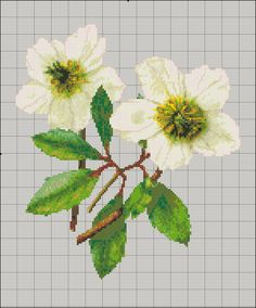 hellebore Flowers Nature, Spring Flowers, Cross Stitch Designs, Cross Stitch Patterns, Learning To Embroider, Stitch 2, Cross Stitch Flowers, Amazing Flowers, Sewing Clothes