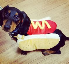 Classic costume for a dachshund Puppy Costume, Dog Costumes, I Love Dogs, Cute Dogs, Dachshund Love, Dog Friends, Fur Babies, Baby Animals, Weiner Dogs