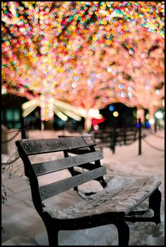 Christmas lights and a snowy bench.