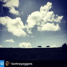 ON HORSE NATION >> Weekly Instagram Roundup. Don't forget to tag your instas with #horsenation, citizens!