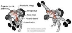 Bent over lateral raise. An isolation exercise. Target muscle: Posterior Deltoid. Synergistic muscles: Lateral Deltoid, Middle and Lower Trapezii, Infraspinatus, Teres Minor, and Rhomboids.