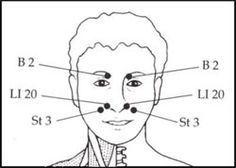 face anatomy diagram