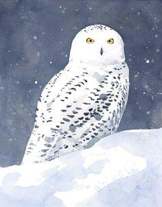 Snowy Owl art print - david scheirer watercolors