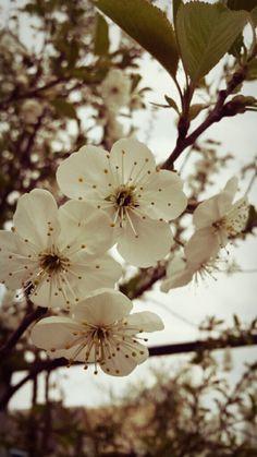 Dandelion, Photograph, Plants, Flowers, Photography, Dandelions, Flora, Plant, Fotografie