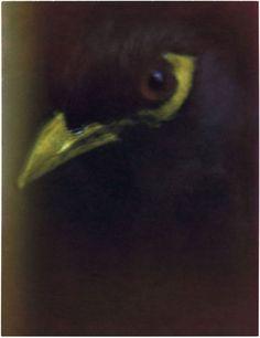 Oiseau par Sarah Moon