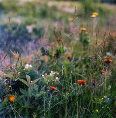 Wild flowers. (Photo: Grassdoe)
