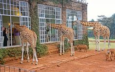 25 Hotels Around The World Perfect For Animal Lovers - Add to Bucketlist , Vacation Deals Vacation Deals, Dream Vacations, Vacation Trips, Disney World Usa, Paris Destination, Real Haunted Houses, Best Airlines, Beautiful Waterfalls, East Africa