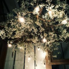 decoration plafond fleurs Chandelier, Christmas Tree, Ceiling Lights, Marketing, Boutique, Lighting, Holiday Decor, Table, Flowers