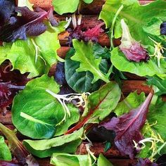 MESCLUN STARBURST MIX 500 Heirloom Non-gmo Seeds FREE Shipping Lettuce