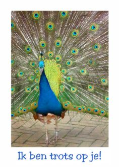 Trotse pauw, proud peacock. Change text and send card from Kaartje2go - creagaat dieren