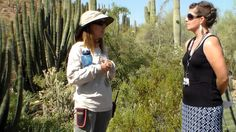 How to Stay Cool at the Desert Botanical Garden