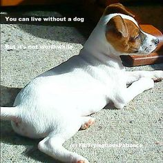 You can live without a dog, But it's a lonely world with no one to greet you when you get home!