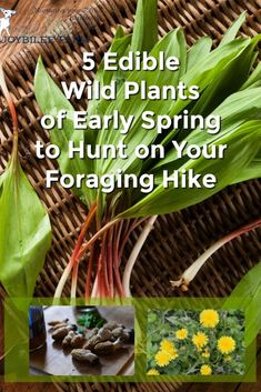 5 Edible Wild Plants