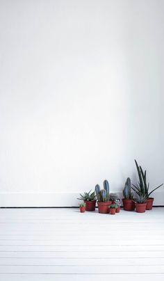 Cactus | Mi casa no es de muñecas | Blog y asesoría online en decoración e interiorismo