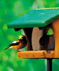 Birding a great hobby Wild Birds Unlimited, Wild Bird Feeders, Great Hobbies, Libraries, Baltimore, Yards, Gardening, Outdoor Decor, Free
