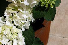 Inspiración floral nysirosh tall