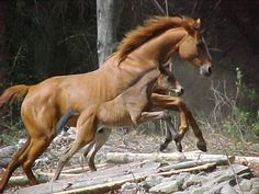 Pretty mam n sunny Baby Horses, Cute Horses, Wild Horses, All The Pretty Horses, Beautiful Horses, Funny Animals, Cute Animals, Photo Animaliere, Horse Tail