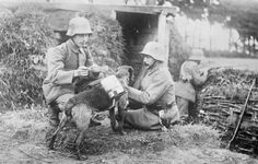 A dispatch dog brings food to the soldiers in the trenches.