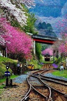 Cherry Blossom Train, Japan  Go on a walking tour of Japan! Visit www.walkjapan.com for details.
