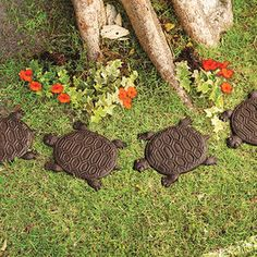 Turtle Stepping Stones