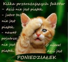 Kartka pod tytułem :( o nieee...! Dziś jest poniedziałek Weekend Humor, Beautiful Love Pictures, Funny Mems, Funny Signs, Man Humor, Good Mood, Fun Learning, Cat Love, Crazy Cats