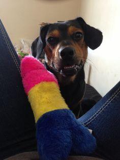Love my dog! Boston terrier dachshund mix!