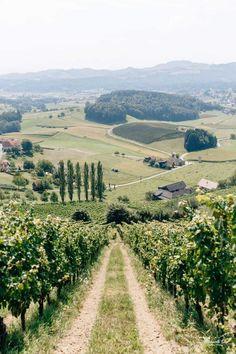 What view!!! #view #vineyards #weinberge #austria #österreich Margarita, Austria, Vineyard, Wedding, Outdoor, Wine Vineyards, Casamento, Outdoors, Margaritas