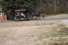 Horse and Buggy in Lumber Bridge,NC