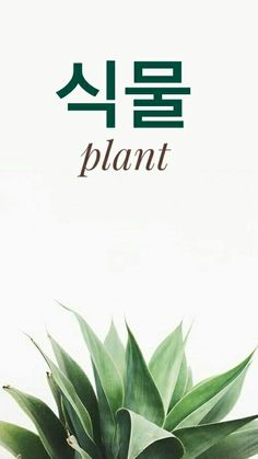 Plant in korean