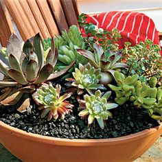 mixed succulents - use plantings to enliven your outdoor table - this shallow bowl of mixed succulents makes a great centerpiece