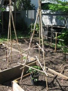Home-made tomato cages - make open-topped varieties that can be expanded upwards