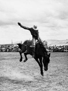 rodeo cowboy prints